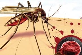 Sıtma Nasıl Olunur ?