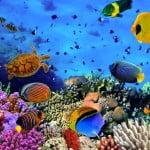 akvarist-nasil-olunur