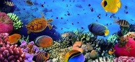 Akvarist Nasıl Olunur ?